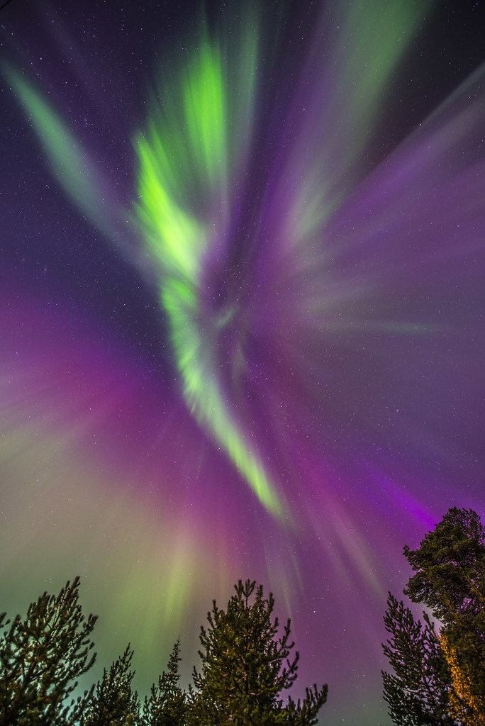 Aurora angel eyes-2327