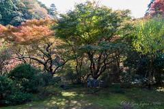 (GenJapan1986) Tags: 2014          japan kyoto nikond600 autumn  kozanji worldheritagesite zf2 distagont225 carlzeiss