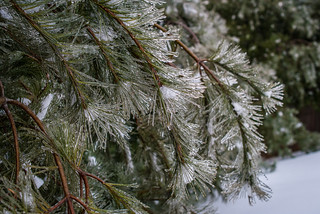 Winter's Icing (Explore!)