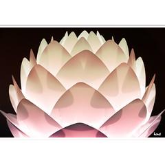 I hung a lamp (horstmall) Tags: light flower lamp fleur design lampe licht shine lumière danish blume silva vita leuchte leuchten horstmall