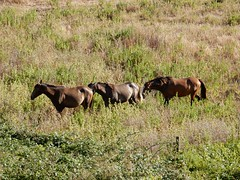 Os cavalos do Marqus (LuPan59) Tags: oeiras cavalos lupan59