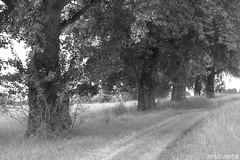 A Path (1aB) Tags: pfad weg path bume trees landschaft landscape bw schwarzweis