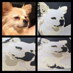 I've seen this done with people's portraits before and have been dying to do it with my dog Benjie. I wanted to see if I could get my Cricut to cut it out and after playing around with Inkscape, I was able to get it to do it with excellent results... (Jenstermusic) Tags: dogportrait pomchi paperportrait cricutpaperart inkscape cricutexplore instagramapp square squareformat iphoneography