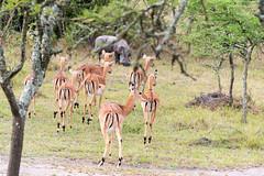 Lake Mburo National Park (MadGrin) Tags: africa orientale uganda repubblica travel viaggio westernregion uga