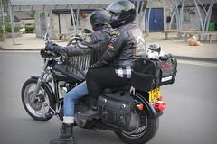 Motorcycle dog (deanhammersley) Tags: dogonamotorcycle dog hound bike silly daft cute dogs harley davidson