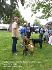 DAT2016_Crowd_1087 (greytoes_99) Tags: agility dat2015 dat2016 event humanesocietytacoma people summer tacoma tacomahs volunteers dog humananimalbond cat lakewood wa us