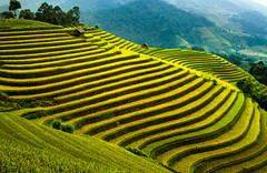 IMG_2777s (viet.longnd@yahoo.com) Tags: ricefields cultivation farming nature scenery landscape landmark traditional travel famous mountain collectiveprocess economic poverty ethnic hanoi vietnam china campuchia