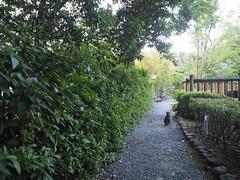 _P7220112 (shiro.takeda) Tags: