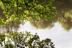 hang in (MRZ-PHOTOGRAPHY) Tags: nature tree branches river water green life breathe limoges france photography canon 50mm