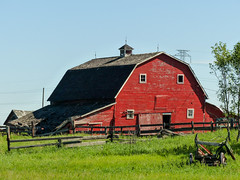 Bright and cheery in its old age (annkelliott) Tags: alberta canada eofcalgary architecture building barn oldbarn wooden weathered red paint bright collapsing fence grass tree rural ruralscene outdoor summer 18july2016 fz200 fz2004 annkelliott anneelliott