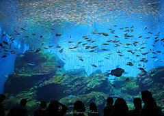 - The sea life is sparkling. (shig.) Tags: aquarium sea fish water waterside wave blue ocean       canon eos 70d