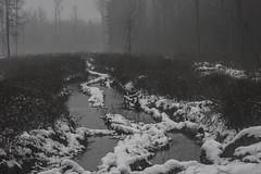 our perfect earth (Mindaugas Buivydas) Tags: lietuva lithuania forest tree trees fog mist autumn fall november color bleak mood moody snow rain sleet road path humantouch pailimikas pailiaiforest