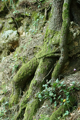 A man or...? (Gianluca De Dominici) Tags: man trees nature wild strain people sit green tree art