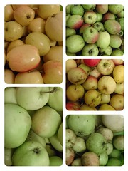 Apples for cider; collage-1473606677947 (pilsnerjohan) Tags: apples apple cider cidre fruit pple