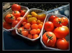 reiche Ernte.... (karin_b1966) Tags: fruchtgemse fruitvegetable garten garden natur nature 2016 tomaten tomatos yourbestoftoday