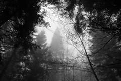 mutant fir  (cyberjani) Tags: bw nature fog forest slovenia cave rakitna vihrenica