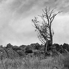 Kindling (nudibranches) Tags: blackandwhite bw tree landscape sigma australia canberra act dp2q
