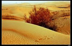 nEO_IMG_IMG_0451 (c0466art) Tags: trip travel light beautiful canon landscape photo big sand scenery pattern desert south wide chinese  2012  5d2 c0466art