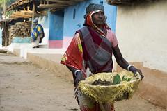 Working woman (wietsej) Tags: woman india zeiss village sony working 1670 wietse chhattisgarh jongsma sonyalphadslr a6000 bhoramdeo kawardha sel1670z