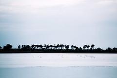 The Horizon Trees (stefaniebst) Tags: blue light shadow sky france tree nature silhouette landscape island lumire horizon ombre bleu ciel serenity paysage arbre r charente dreamscape le naturescape srnit naturescene