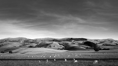 20150105_DSC6702.jpg (dave.fergy) Tags: sunset sky blackandwhite animals clouds landscape countryside sheep hill
