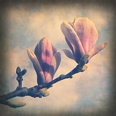 spring unfolding (lee atwell) Tags: texture squared texturesquared