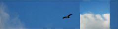 DSC04787-001bw (SOPHOCO -santaorosia photographic collectivity-) Tags: azul invierno jaca pirineo ribbet diptico sophoco