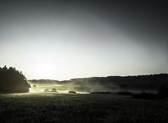 Aufbruch II. (gnseblmchen) Tags: trees wallpaper plants tree nature forest landscape landscapes background natur stock pflanzen free creativecommons vegetation wald bume baum forests landschaften lanschaft wlder