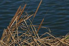 A la orilla del Ebro (Egg2704) Tags: españa rio spain zaragoza ebro aragón rioebro granfoto egg2704 superfotosmaravillosas