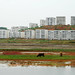 Nampo / 남포 (North Korea) - Blocks and rice field