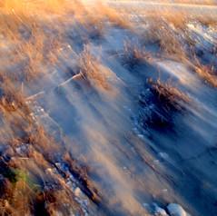 Dust at Dawn (zventure, off/on) Tags: france dawn sable fil aube alpesmaritimes buissons bordsduvar
