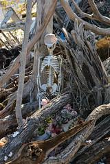 Grim Reminder (Victoria Lea B) Tags: halloween skeleton southcarolina driftwood bone lowcountry sthelenaisland gayfishcompany