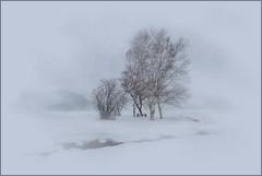 White-out (edenseekr) Tags: winter digitalart wabi snowfall nystate