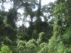 The Jungle of Danum Valley