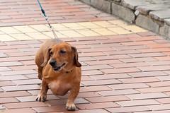 DS7_7466.jpg (d3_plus) Tags: street sea dog beach nature japan walking scenery outdoor fine daily  enoshima tamron seashore    dailyphoto thesedays   fineday shichirigahama   tamron28300mm    tamronaf28300mmf3563  route134 a061   d700  tamronaf28300mmf3563xrdildasphericalif  nikond700 tamronaf28300mmf3563xrdildasphericalifmacro tamronaf28300mmf3563xrdild 134 a061n