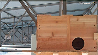 Outside view of #texasbarnowls nest box zoomed out