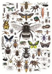 Composition print (C.Nahaboo) Tags: colour illustration blackwhite artwork insects limitededition invertebrates argiope bombus apis cicindela lucanus tabanus megasoma brachypelma scolopendra poecilotheria theraphosa manticora acherontia ornithoptera chiasognathus nicrophorus goliathus tachina dynastes chrysina creophilus epomis