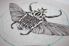 Goliath Beetle (ShinyFabulousDarling) Tags: art geometric tattoo illustration artwork beetle entomology tattoodesign goliathbeetle tattooinspired scienticillustation
