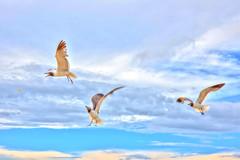Seagulls (yosmama151) Tags: galvestonisland beach sand surf vacation texas 2016 gulfofmexico ocean water summer hdr birds seagulls avian fly sky clouds