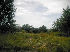 Spring Creek Forest Preserve. 1. (ssntx) Tags: texas 13mp