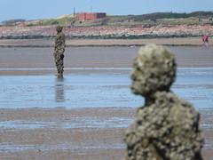 DSCF0737 (SierPinskiA) Tags: sea shells beach liverpool sand ironman pools barnacles ironwork mayday seashore merseyside anthonygormley irishsea 2016 anotherplace crosbybeach blundellsands fujixs1