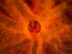 P4096773 (Jeannot Kuenzel) Tags: leica blue sea macro water port photography mediterranean underwater alien under deep scuba diving olympus malta zen supermacro moods asph f28 45mm underwaterworld s2000 dg 240z underwaterphotography extrememacro ois jeannot inon macroelmarit underwatercreature kuenzel z240 maltaunderwater underwatermacro underwateralien supermacrophotography ucl165 wwwjk4unet jk4u epl5 maltaunderwatermacro maltaunderwaterphotography bestmaltaunderwaterpictures maltamacro maltascubadiving underwatersupermacro jeannotkuenzel aliensofthedeepblue superextrememacro aliensofthesea