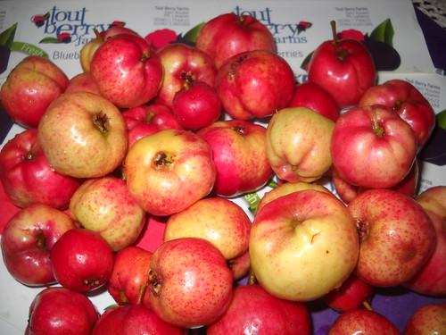 Zaarour Mayhow Berry Fruits Aug 7, 2016 (18)