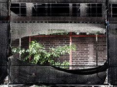 rip off (Peter Schler) Tags: ripoff vorhang curtain flickr peterpe1 gerst scaffold