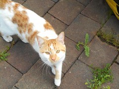[Updated] Fri, May 27th, 2016 Found Male Cat - Broadfield Court, South Dublin (Lost and Found Pets Ireland) Tags: foundcatbroadfieldcourtdublin found cat broadfield court dublin may 2016