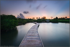 Walking on the Water (Jean-Michel Raggioli) Tags: martinique waterscape caribbean mangrove pier pond