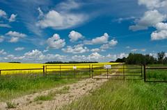 Alberta Resources (L E Dye) Tags: fencefriday alberta canada canola d5100 ledye nikon oilandgas summer fence prairie rural