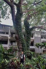 BIGTrees-Taradon-Miti Ruangkritya (bigtreesproject) Tags: 66835548622 mitiruangkritya miti139hotmailcom mitimiticom wwwmiticom
