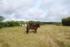 Cavalos (gabrielribeirocabreira1) Tags: horses clouds winter nuvens cavalos rural campo