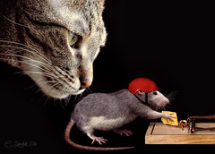 DoubleJepardy1225760 (clabudak) Tags: cat mouse rat cheese danger mousetrap ~themagicofcolours~viii platinumheartaward crazygeniuses